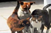 Funny-Cat-Try-Not-To-Laugh-Funny-Dog-Funny-Cats-and-Dogs-Funny-Animal-Video-Colors-Of-Life