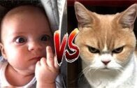 Funny-Cat-Videos-Baby-and-Cat-Fun-and-Cute-Funny-Baby-Videos