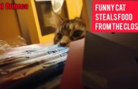 Funny-Cat-steals-food-from-the-closet