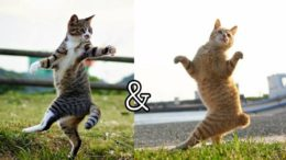 Funny-Cats-17
