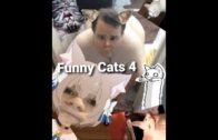 Funny-Cats-4-2