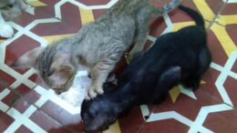 Funny-Cats-And-Kittens-Who-Really-Dont-Want-to-Share-Their-Food-Compilation