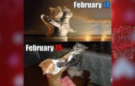 Funny-Cats-And-Some-LOVE-in-The-AirFunny-Cats-Motel