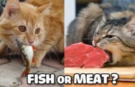 Funny-Cats-Cats-Vs-Food-Fish-Or-Meat-What-does-cat-like-to-eat-Try-Not-To-Laugh-Challenge