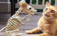 Funny-Cats-Dont-try-to-stop-laughing-Funniest-Cats-Ever-YouTube