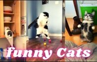 Funny-Cats-Videos-Best-Cat-Videos-to-Starting-2021