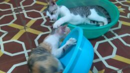 Funny-Cats-and-Cute-Kittens-Playing-and-Fighting-in-Bowls