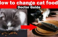 How-To-Shift-Dry-Food-To-Homemade-Cat-Food-In-Urdu-Tips-and-guidelines-Vet-Furqan-Younas