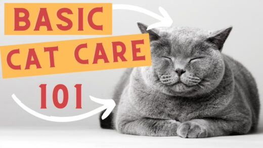How-To-Take-Care-Of-Your-Cat-Caring-For-A-Cat-Cat-Care-Tips