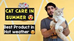 How-to-Keep-Your-Cat-Cool-in-Summer-Cat-Care-in-Hot-Weather-Tips-For-Keeping-Your-Cat-Cool