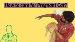 How-to-care-for-pregnant-Cat-l-Pregnant-Cat-Care-Tips-l-Care-of-cat-in-Pregnancy
