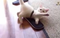 Keep-Calm-And-Watch-Funny-Cats-