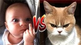 Life-Funny-Pets-Angry-Funny-Cats-Funny-Cat-Reaction-Videos
