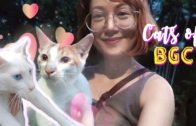 Lovely-Funny-Cats-of-BGC-Feeder-Volunteer-for-BGC-Cats-.