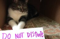 My-cat-demonstrating-simple-self-care-tips-a-reminder-to-appreciate-yourself