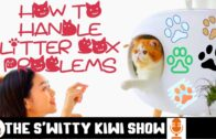 PETS-FANS-S1E6-Cat-Care-Tips-How-to-Handle-Litter-Box-Problems