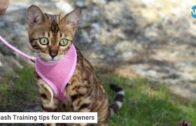 Pet Care: Leash Training tips for Cat owners