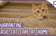 Quarantine-Cat-Care-Basic-at-Home-Cat-Care-101