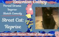 Street-Cat-Reprise-Maosical-Theatre-FUNNY-CAT-VOICE-OVER-VIDEOS-Singing-Kitty-Cat