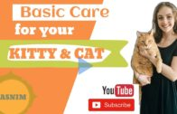 The Basic Take Care for Your Kitten & Cat
