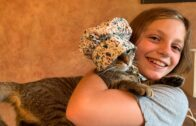 Tips-To-Take-Better-Care-Of-Your-Cat