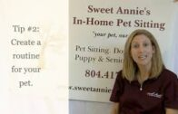 Tips-for-Managing-Dog-and-Cat-Stress-Sweet-Annies-In-Home-Pet-Sitting