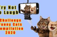Try-Not-To-Laugh-Challenge-Funny-Cats-compilation-2020
