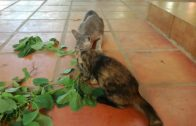 Two-Cute-Cats-Eating-Plant-Roots-Baby-Cats-Cute-and-Funny-Cat-Videos-Compilation-Aww-Animals