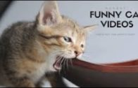 Very-funny-cat-The-most-beautiful-pet-video-collection-HD