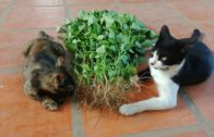 Watch-Cats-Eating-Plant-Root-Cat-Baby-Cats-Funny-Cats-and-Kittens-Meowing-Compilation