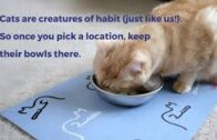 Where to Put Cat Food and Water Bowls? Tips for Selecting the Best Locations to Place Cat Dishes.