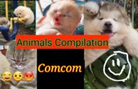 Baby Animals Video Editing of Cute Dogs and Funny Cats #21  赤ちゃん動物 かわいい犬と面白い猫の動画編集