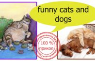 funny-cats-and-dogs-4