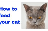 how-to-feed-your-cat-Whiskas-2020